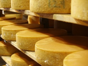 Meules de fromage dans une cave d'affinage