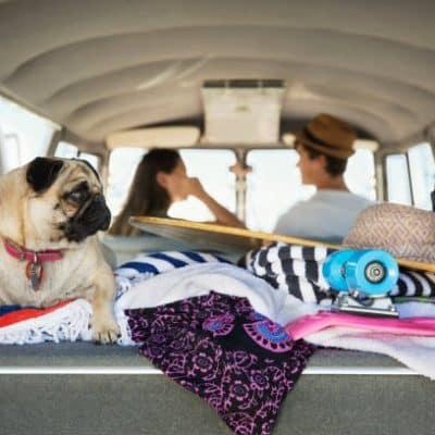 Couple qui part en vacances avec son chien carlin
